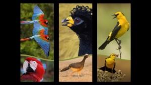 aves lab